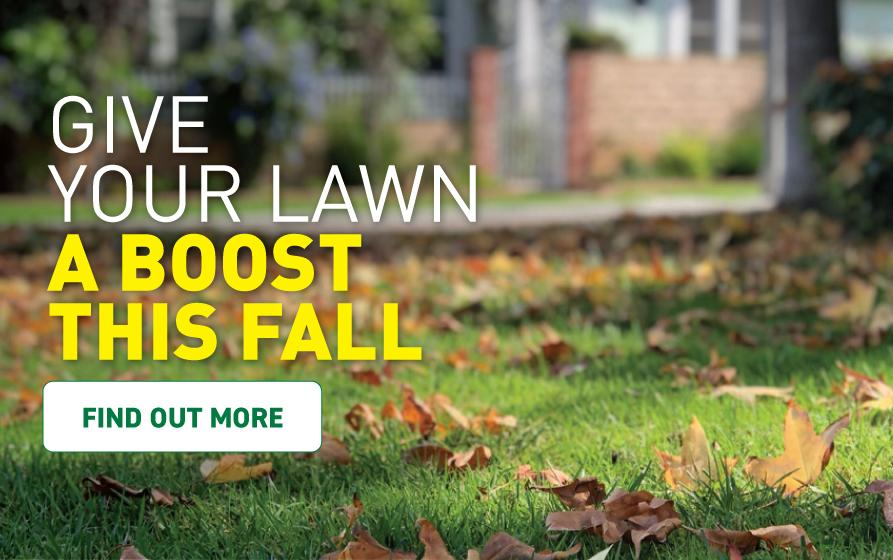 Give your lawn a boost this fall - Fall leaves cover a lush green lawn in the fall.