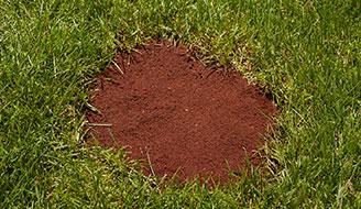 How To Fix Bare Patches In Lawn Mycoffeepot Org