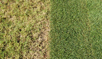 Side-by-side of a unhealthy brown lawn and a healthy green lawn.