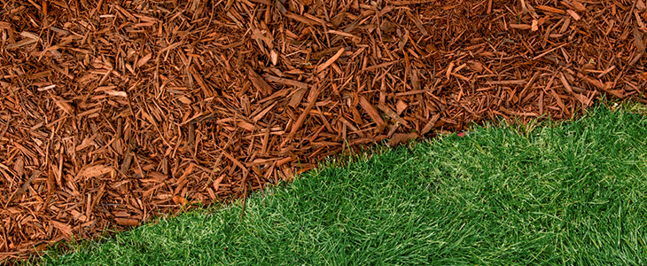 A perfectly edged mulch bed next to a green lawn.