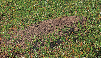 Fire Ant Hive - How to Control Fire Ants