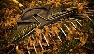A rake sitting in a pile of leave.