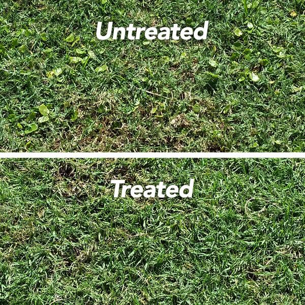 Image of Untreated vs Treated Grass. top image is untreated and turning brown, bottom image is treated and the grass looks healthy and green