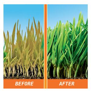 image of comparison between a treated and untreated lawn- Left picture is an untreated lawn with a disease. Right is a treated lawn that is green and healthy