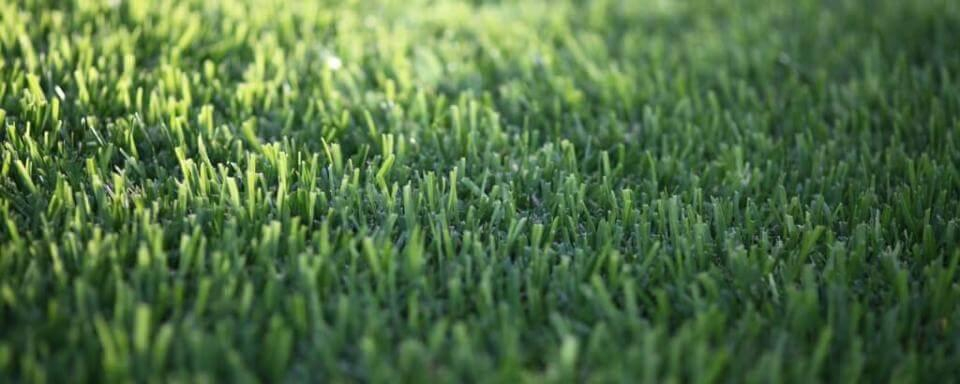 Grass Seed - Green Lawn