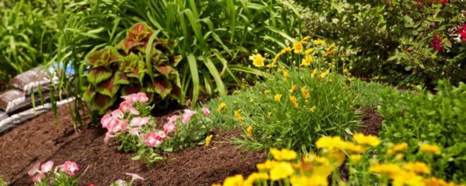 Home & Garden - Garden with Brown Mulch