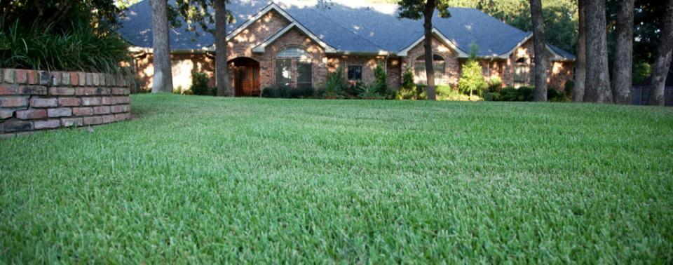 Insect & Disease Control - Lawn
