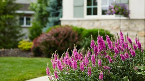 What Is Curb Appeal: front landscape with flowers