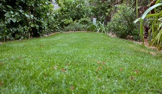 Zoysiagrass Lawn maintained by Scotts