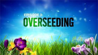 Episode 3: Overseeding The Lawn