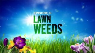Episode 6: Controlling Lawn Weeds