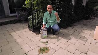 How To Control Weeds On Driveways