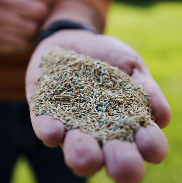 person holding seed in hand